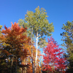 Fall Color on a Michigan Roadside