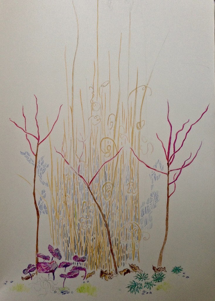 Sketch of Grasses and Galax by Stephanie Thomas Berry