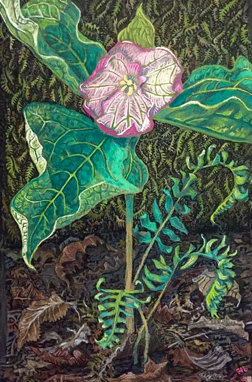 Trillium Shaman: a pastel painting by Stephanie Thomas Berry